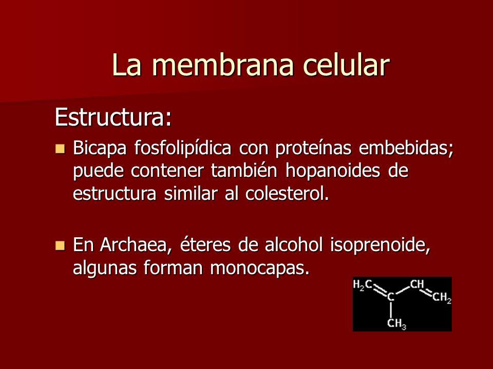Estructura: Bicapa fosfolipídica con proteínas embebidas; puede contener también hopanoides de estructura similar al colesterol.