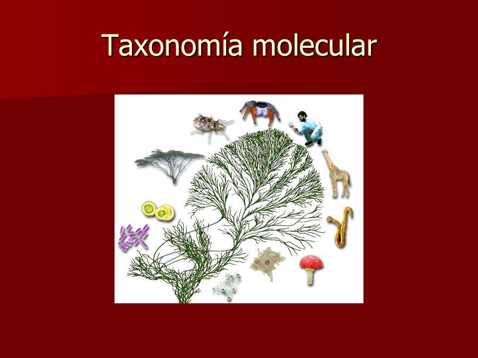 Cambios históricos Haeckel (1866): introdujo reino Protista Haeckel (1866): introdujo reino Protista –Seres vivos sencillos, fotosintéticos y/o móvile