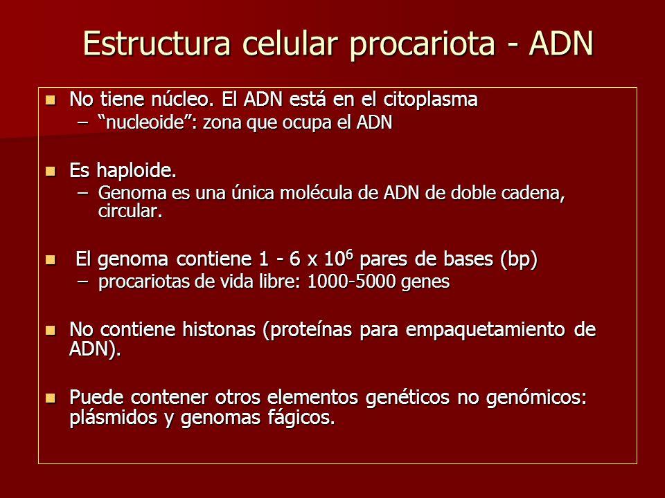 Estructura celular procariota - ADN No tiene núcleo.
