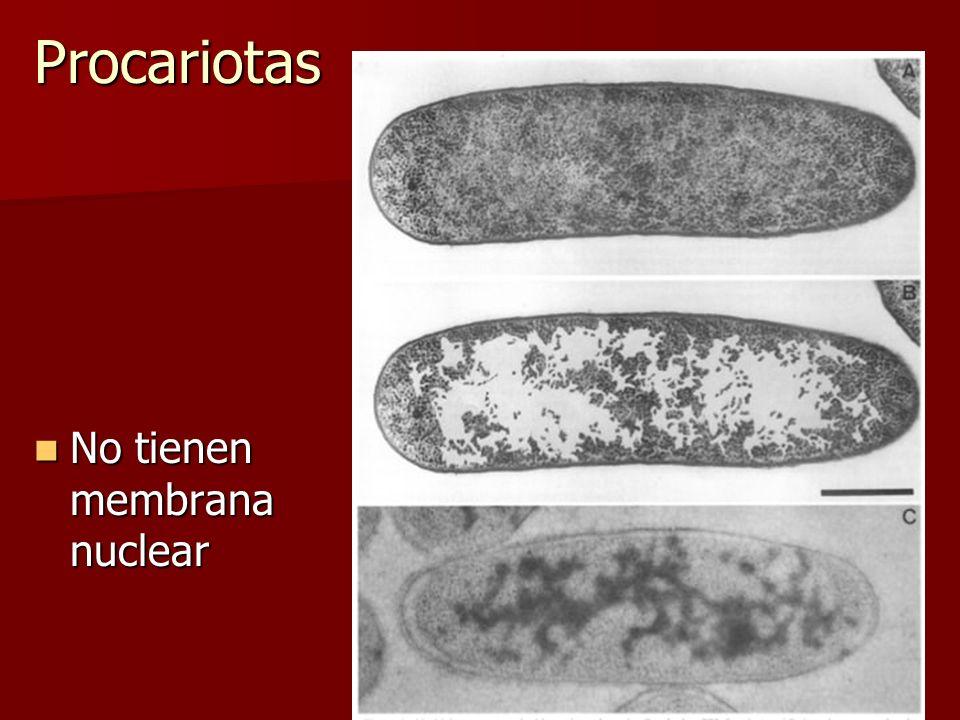 Procariotas No tienen membrana nuclear No tienen membrana nuclear