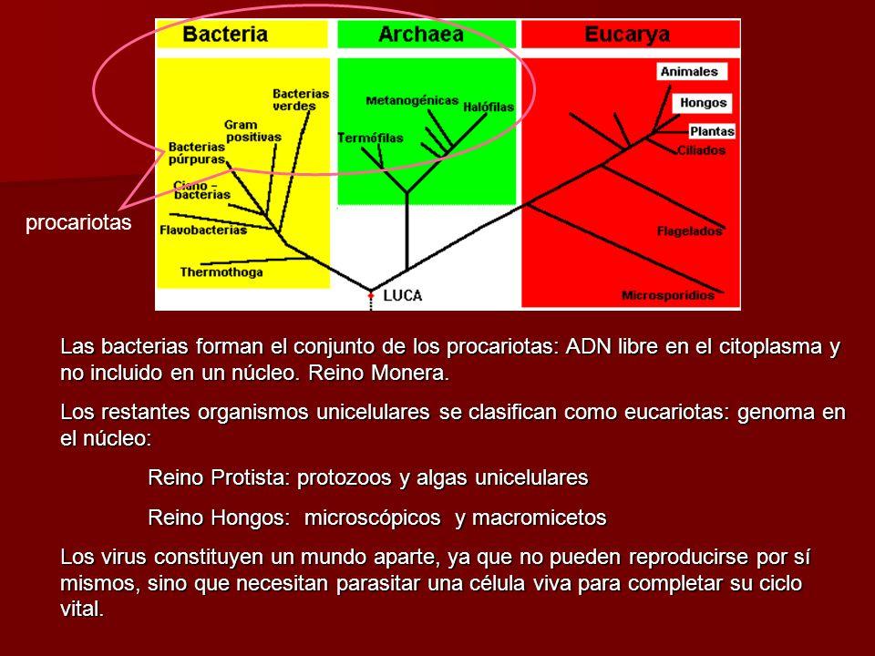 Taxonomía molecular