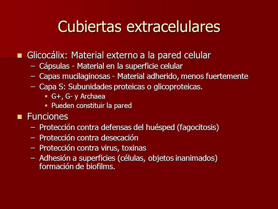 Cubiertas extracelulares Glicocálix: Material externo a la pared celular Glicocálix: Material externo a la pared celular –Cápsulas - Material en la superficie celular –Capas mucilaginosas - Material adherido, menos fuertemente –Capa S: Subunidades proteicas o glicoproteicas.