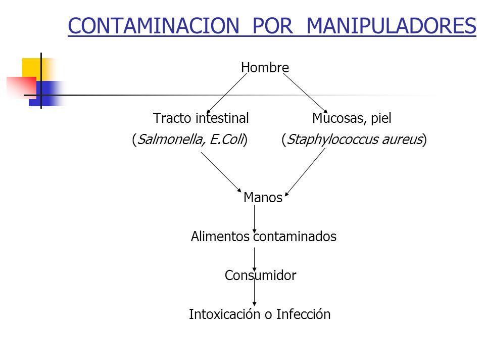 CONTAMINACION POR MANIPULADORES Hombre Tracto intestinal Mucosas, piel (Salmonella, E.Coli) (Staphylococcus aureus) Manos Alimentos contaminados Consu