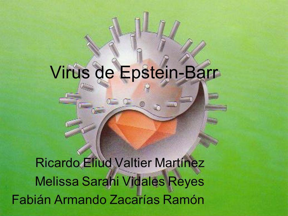 Virus de Epstein-Barr Ricardo Eliud Valtier Martínez Melissa Sarahi Vidales Reyes Fabián Armando Zacarías Ramón