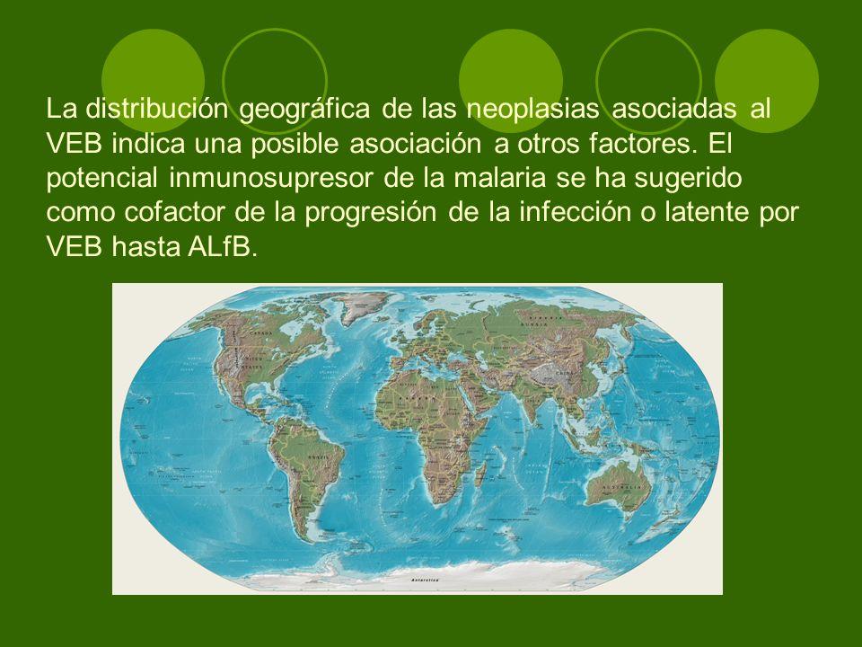 La distribución geográfica de las neoplasias asociadas al VEB indica una posible asociación a otros factores. El potencial inmunosupresor de la malari