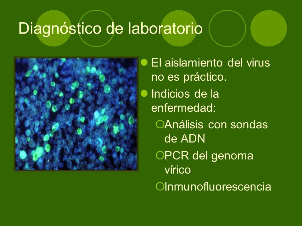 Diagnóstico de laboratorio El aislamiento del virus no es práctico. Indicios de la enfermedad: Análisis con sondas de ADN PCR del genoma vírico Inmuno