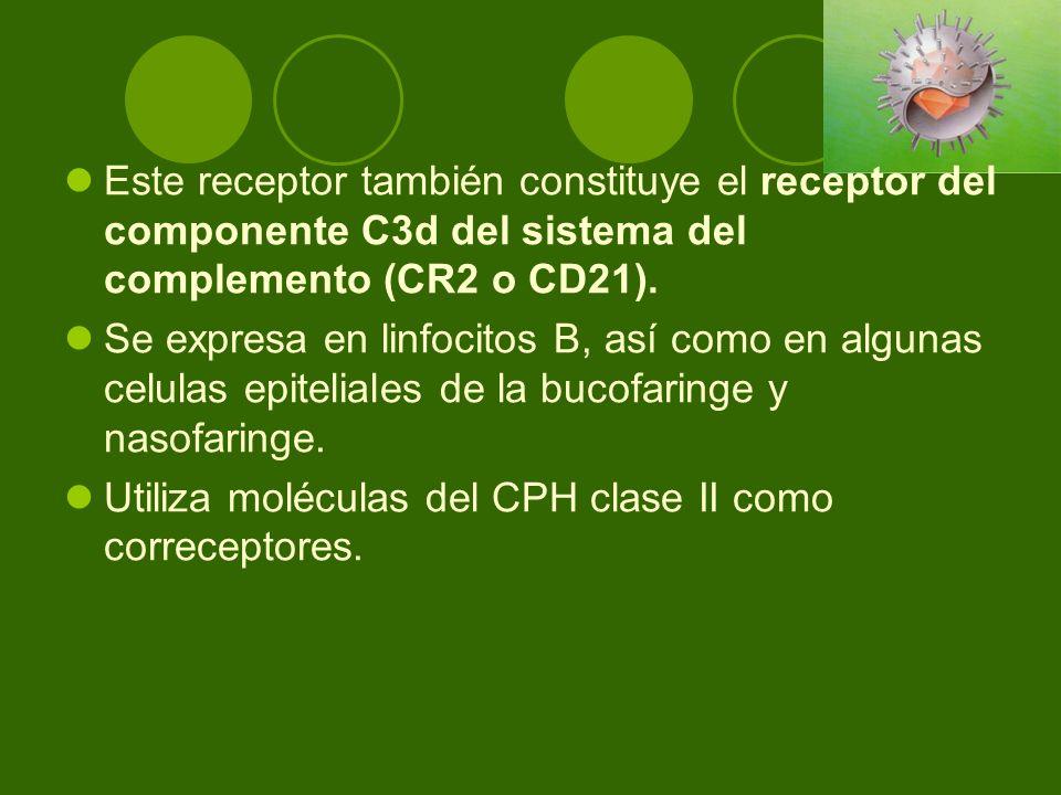 Este receptor también constituye el receptor del componente C3d del sistema del complemento (CR2 o CD21). Se expresa en linfocitos B, así como en algu