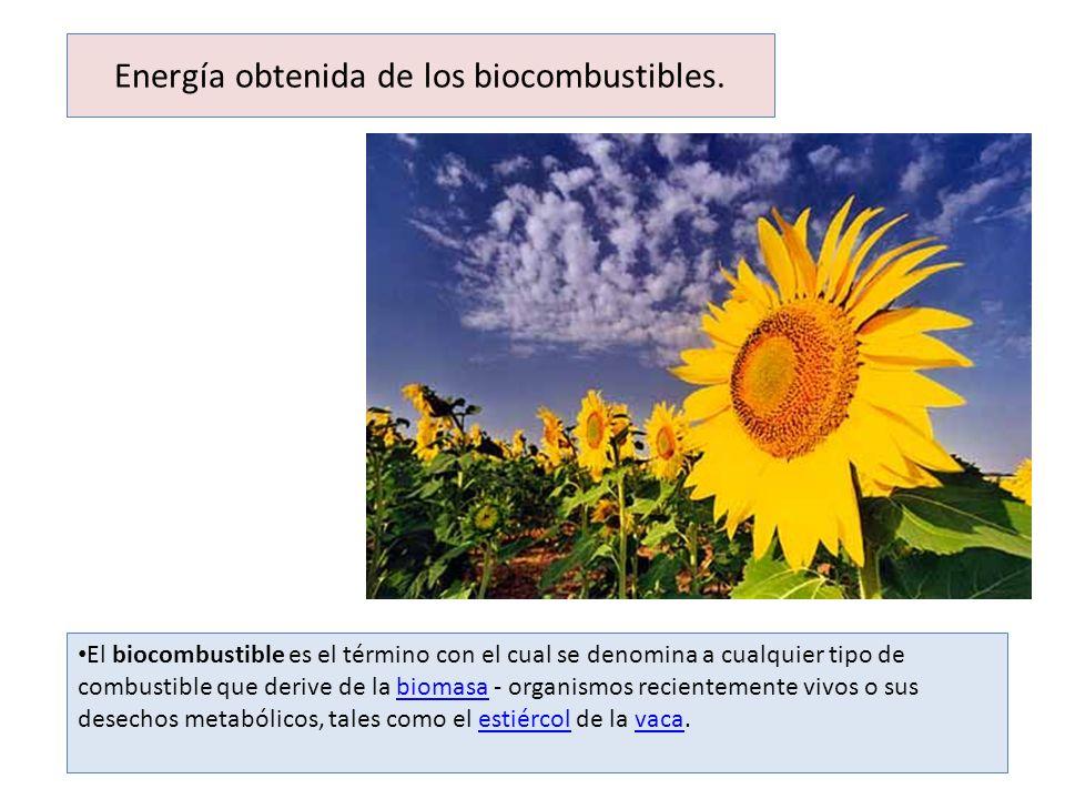 Energía obtenida de los biocombustibles. El biocombustible es el término con el cual se denomina a cualquier tipo de combustible que derive de la biom