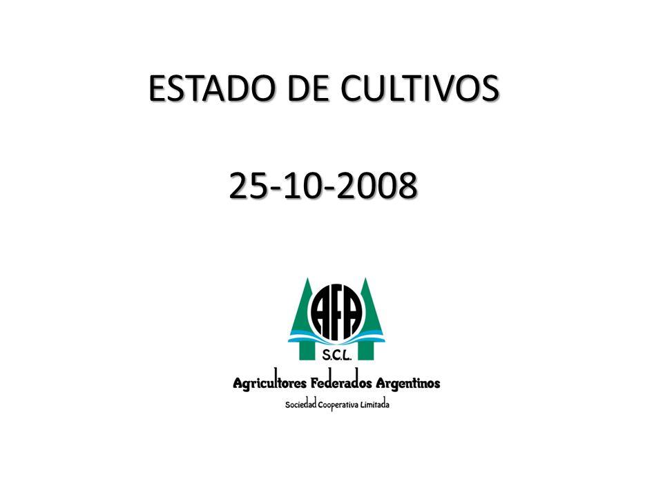 ESTADO DE CULTIVOS 25-10-2008