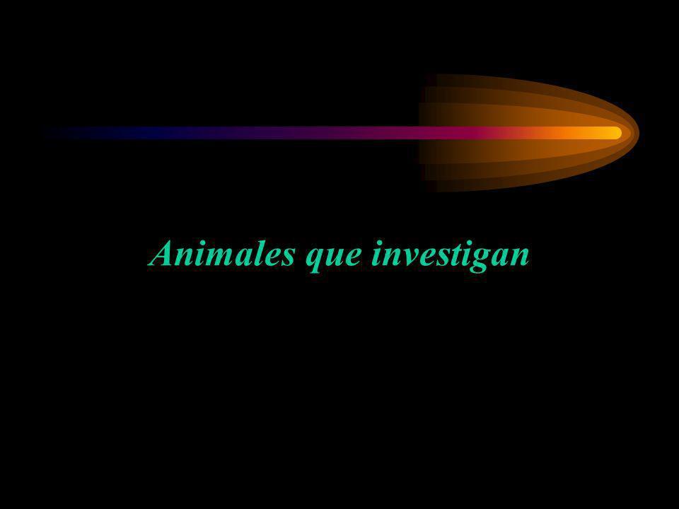 Animales que investigan