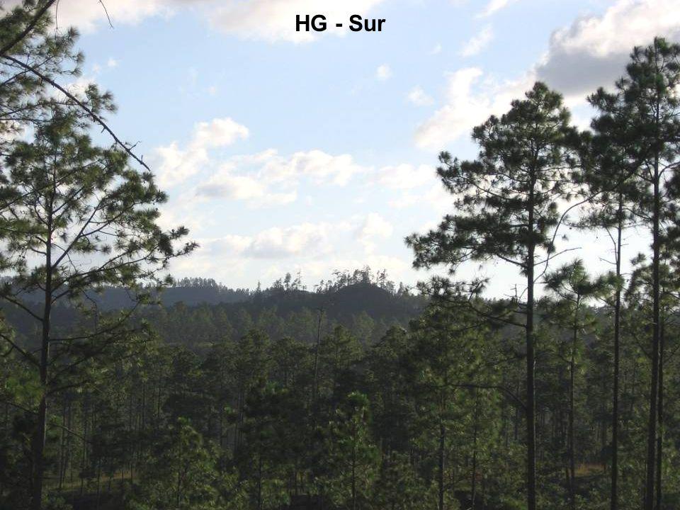 HG - seccion con buen densidad