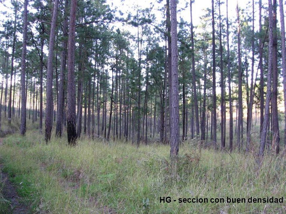Solución Replantar científico de Bosque que Utiliza Planta de Vivero