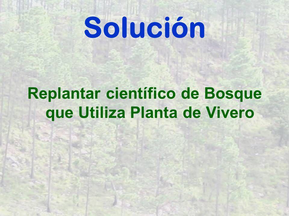 Programa Planta Semillas en el Vivero Maneje Plantulas para crecimiento óptimo Corte en Zonas de Administración de Bosque – corta todos árboles en una zona pequeño.