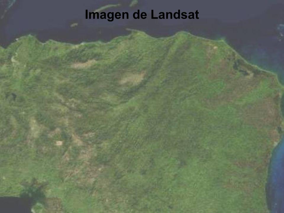 Pino de Honduras El Area de Honduras: 43.433 millas cuadradas (Tennessee: 42.144) Area que Produce Pino: 11.000 millas cuadras (mas o menos) Producción anual de Madera: 1.5M M3