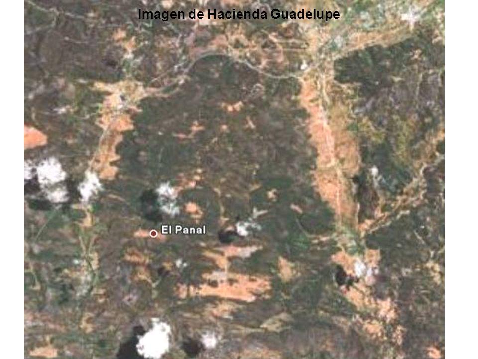 Pino en la Hacienda Guadelupe El área: 2,024 hectarea Población del Arbol : <170/hectárea Bosque de Edades Varios Densidades de Arboles muy variables Distribuciones espaciales ineficaces