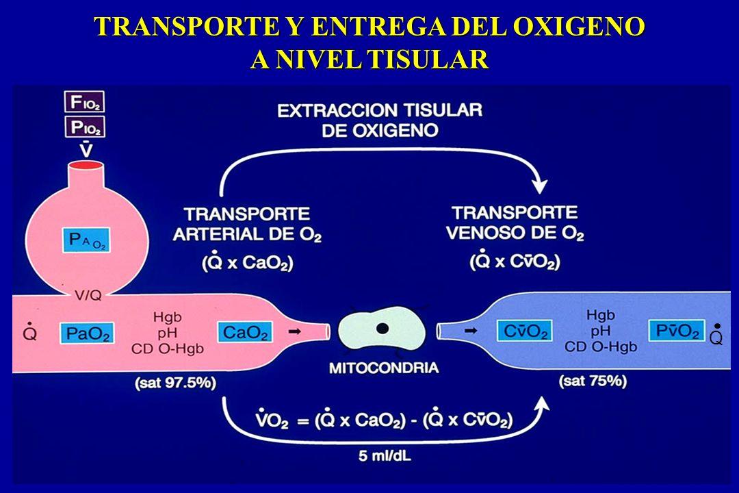 TRANSPORTE Y ENTREGA DEL OXIGENO A NIVEL TISULAR Q