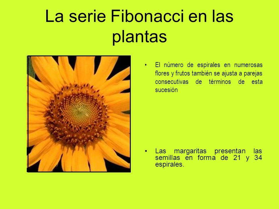 La serie Fibonacci en las plantas El número de espirales en numerosas flores y frutos también se ajusta a parejas consecutivas de términos de esta suc