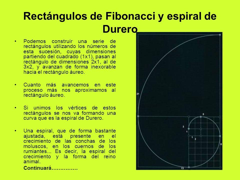 Rectángulos de Fibonacci y espiral de Durero Podemos construir una serie de rectángulos utilizando los números de esta sucesión, cuyas dimensiones par