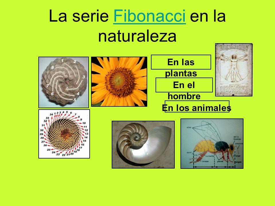 La serie Fibonacci en la naturalezaFibonacci En las plantas En los animales En el hombre