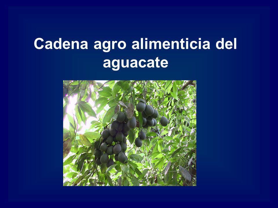 Cadena agro alimenticia del aguacate