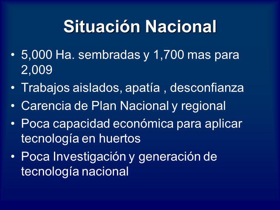 Situación Nacional 5,000 Ha. sembradas y 1,700 mas para 2,009 Trabajos aislados, apatía, desconfianza Carencia de Plan Nacional y regional Poca capaci