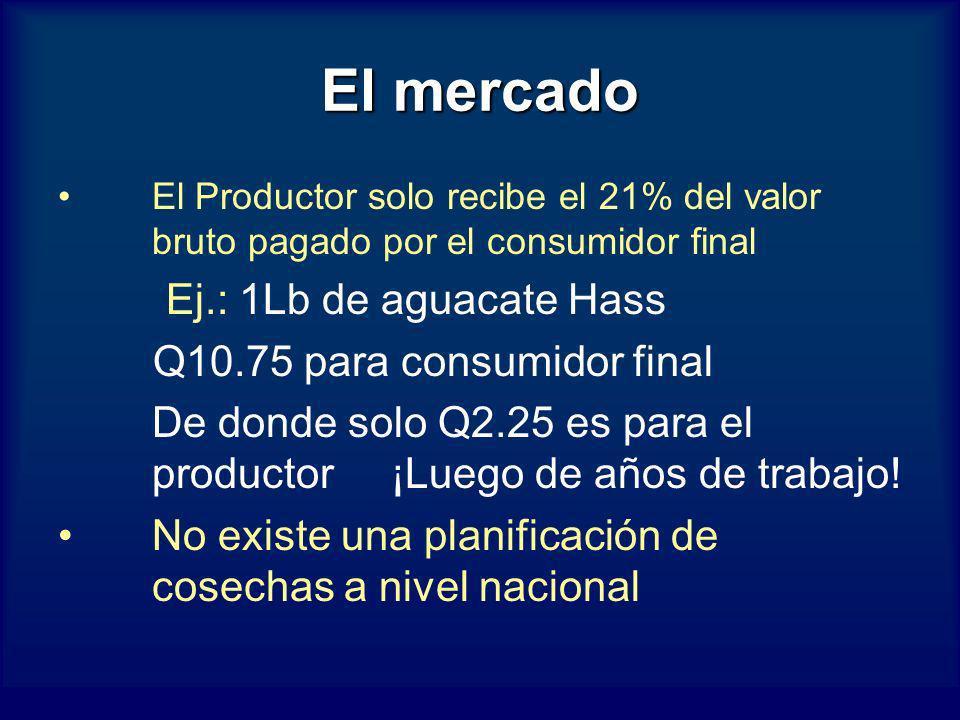 El mercado El Productor solo recibe el 21% del valor bruto pagado por el consumidor final Ej.: 1Lb de aguacate Hass Q10.75 para consumidor final De do