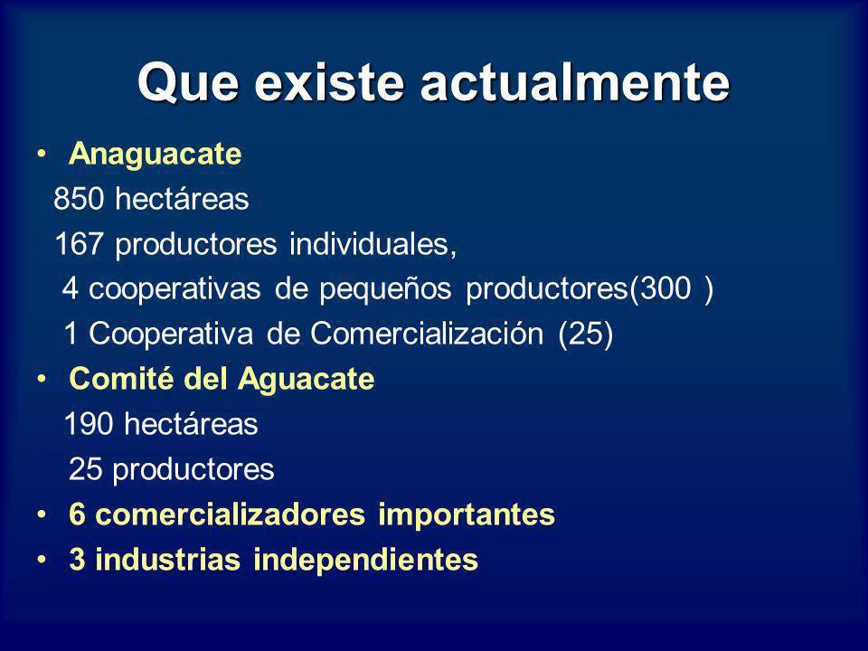 Que existe actualmente Anaguacate 850 hectáreas 167 productores individuales, 4 cooperativas de pequeños productores(300 ) 1 Cooperativa de Comerciali