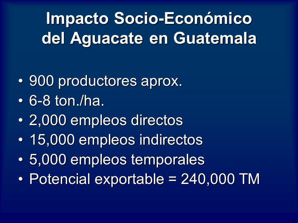 Impacto Socio-Económico del Aguacate en Guatemala 900 productores aprox.900 productores aprox. 6-8 ton./ha.6-8 ton./ha. 2,000 empleos directos2,000 em