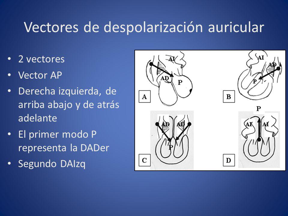 Vectores de despolarización auricular 2 vectores Vector AP Derecha izquierda, de arriba abajo y de atrás adelante El primer modo P representa la DADer