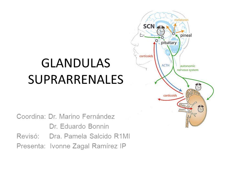 GLANDULAS SUPRARRENALES Coordina: Dr. Marino Fernández Dr. Eduardo Bonnin Revisó: Dra. Pamela Salcido R1MI Presenta: Ivonne Zagal Ramírez IP