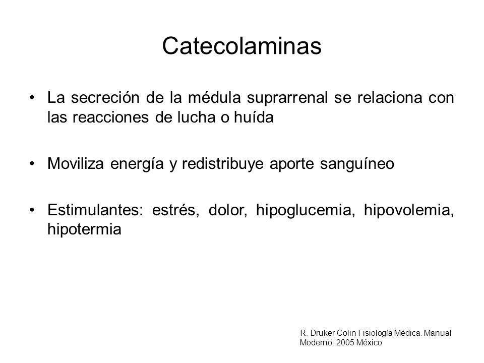 Catecolaminas La secreción de la médula suprarrenal se relaciona con las reacciones de lucha o huída Moviliza energía y redistribuye aporte sanguíneo