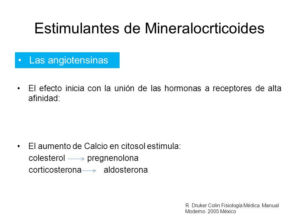 Estimulantes de Mineralocrticoides Las angiotensinas El efecto inicia con la unión de las hormonas a receptores de alta afinidad: El aumento de Calcio