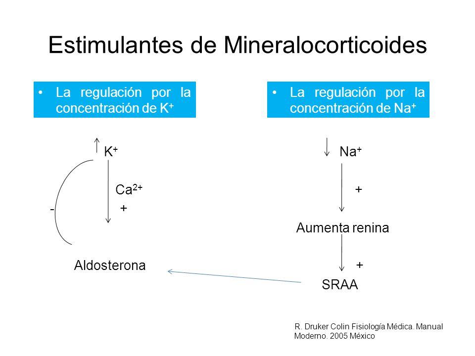 Estimulantes de Mineralocorticoides La regulación por la concentración de K + K + Na + Ca 2+ + - + Aumenta renina Aldosterona + SRAA La regulación por