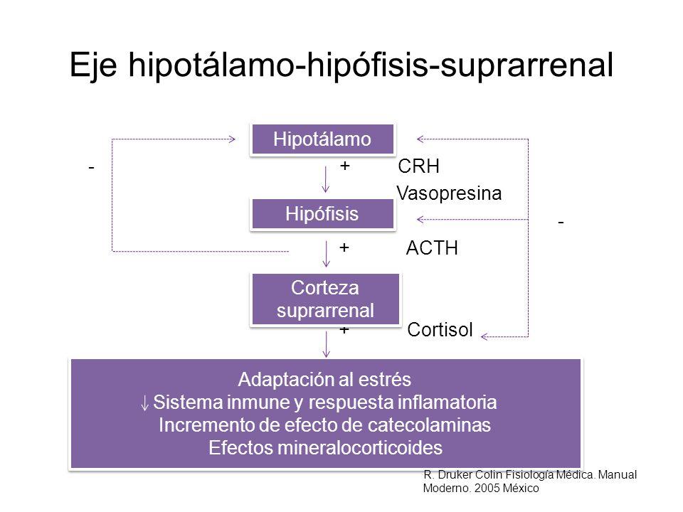 Eje hipotálamo-hipófisis-suprarrenal - + CRH Vasopresina - + ACTH + Cortisol Hipotálamo Hipófisis Corteza suprarrenal Adaptación al estrés Sistema inm