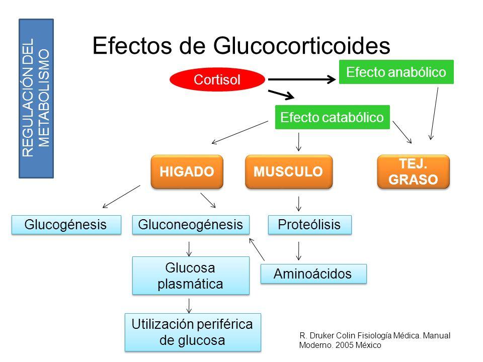 Efectos de Glucocorticoides Cortisol Efecto anabólico Efecto catabólico HIGADO MUSCULO TEJ. GRASO Glucogénesis Gluconeogénesis Proteólisis Glucosa pla