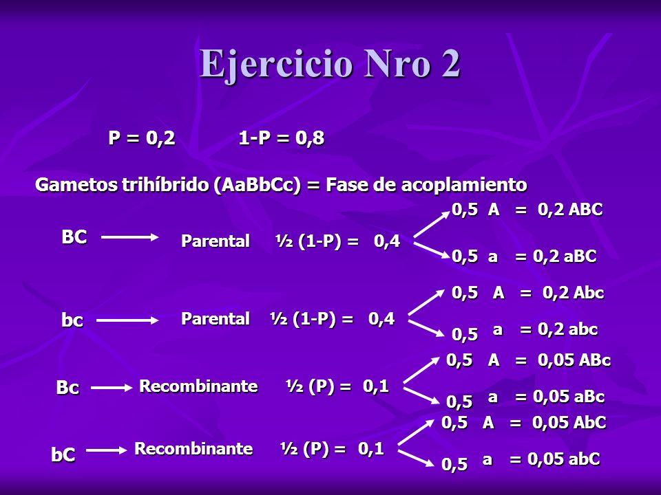Ejercicio Nro 2 Proporciones genotípicas de la descendencia abc (1) ABC (0,2) Abc (0,2) aBC (0,2) abc (0,2) ABc (0,05) aBc (0,05) AbC (0,05) abC (0,05) AaBbCc (0,2) aaBbCc (0,2) Aabbcc (0,2) aabbcc (0,2) AaBbcc (0,05) aaBbcc (0,05) AabbCc (0,05) aabbCc (0,05) Proporciones fenotípicas de la descendencia A_B_C_ (0,2) aaB_C_ (0,2) A_bbcc (0,2) aabbcc (0,2) A_B_cc (0,05) aaB_cc (0,05) A_bbC_ (0,05) aabbC_ (0,05)