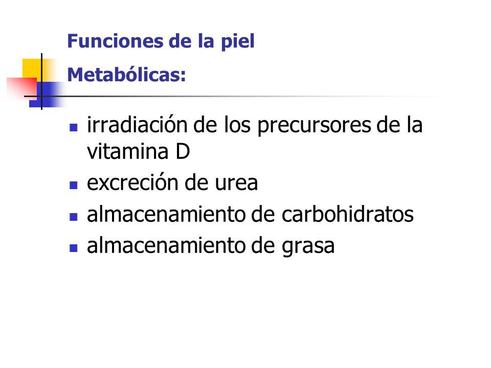 Funciones de la piel Metabólicas: irradiación de los precursores de la vitamina D excreción de urea almacenamiento de carbohidratos almacenamiento de