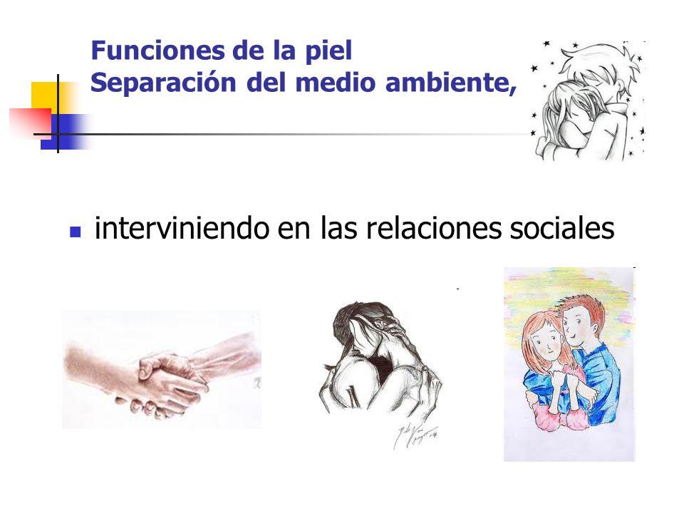 Funciones de la piel Separación del medio ambiente, interviniendo en las relaciones sociales