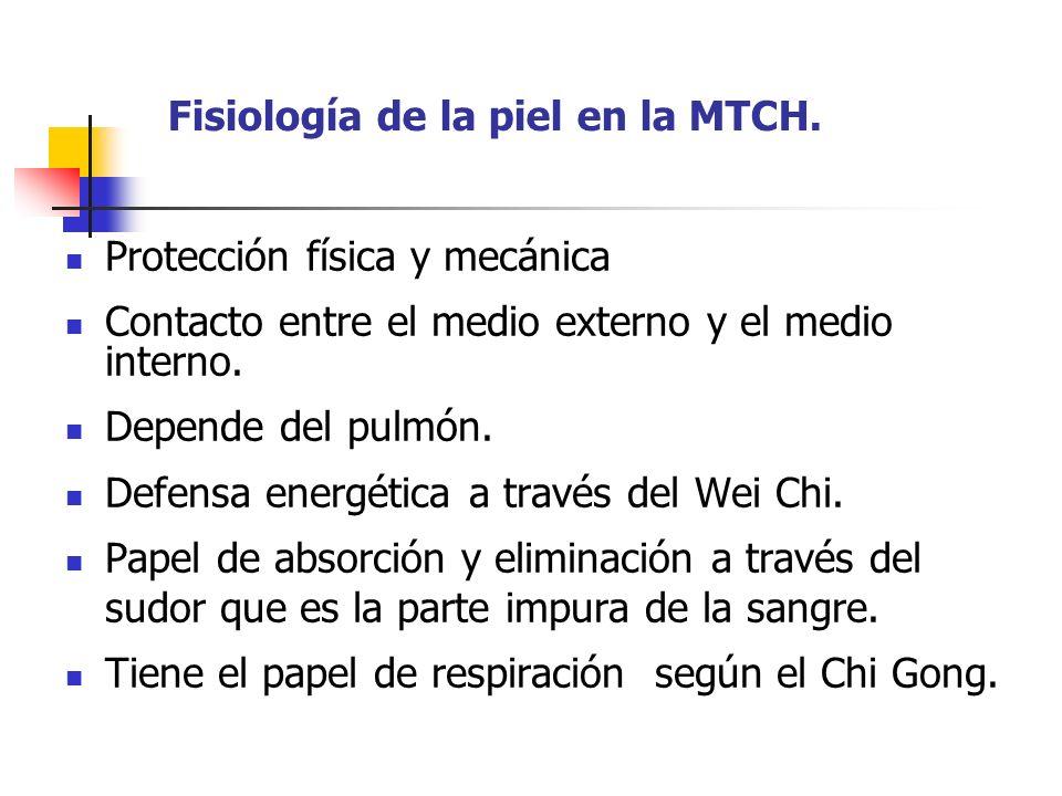 Fisiología de la piel en la MTCH. Protección física y mecánica Contacto entre el medio externo y el medio interno. Depende del pulmón. Defensa energét