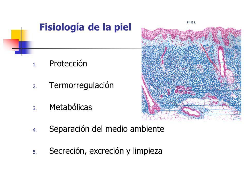 Fisiología de la piel 1. Protección 2. Termorregulación 3. Metabólicas 4. Separación del medio ambiente 5. Secreción, excreción y limpieza