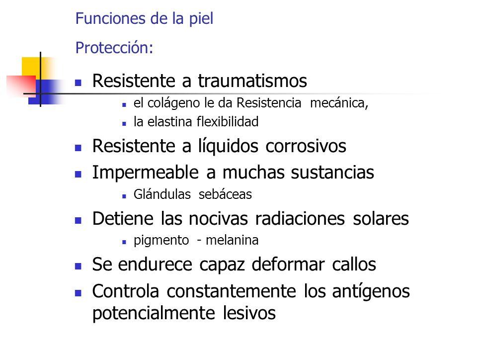 Funciones de la piel Protección: Resistente a traumatismos el colágeno le da Resistencia mecánica, la elastina flexibilidad Resistente a líquidos corr