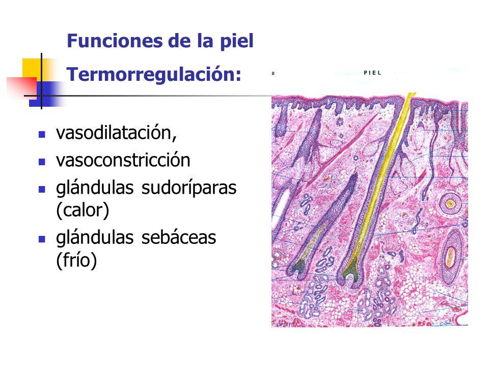 Secuela: máculas pigmentarias cicatrices con prurito calor y dolor neurálgico.
