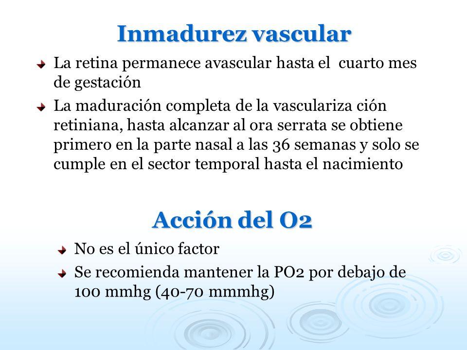 Inmadurez vascular La retina permanece avascular hasta el cuarto mes de gestación La maduración completa de la vasculariza ción retiniana, hasta alcan