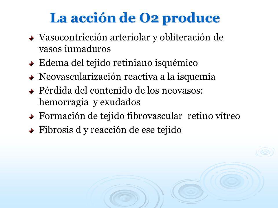 La acción de O2 produce Vasocontricción arteriolar y obliteración de vasos inmaduros Edema del tejido retiniano isquémico Neovascularización reactiva