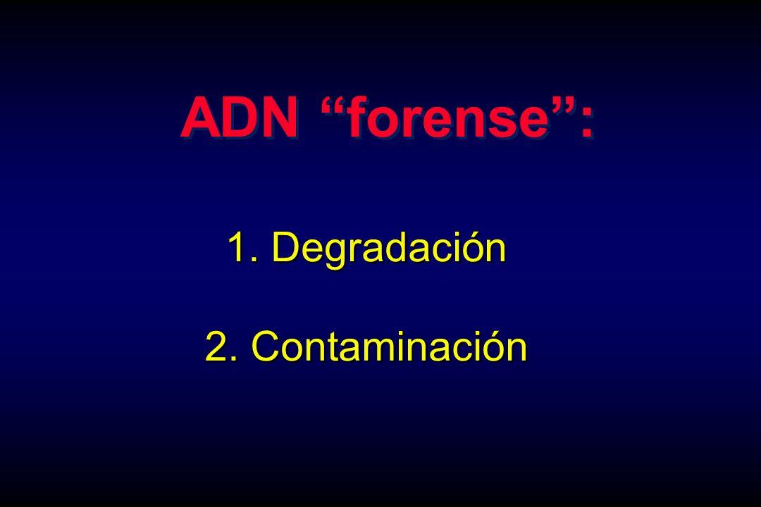 1. Degradación 2. Contaminación ADN forense: