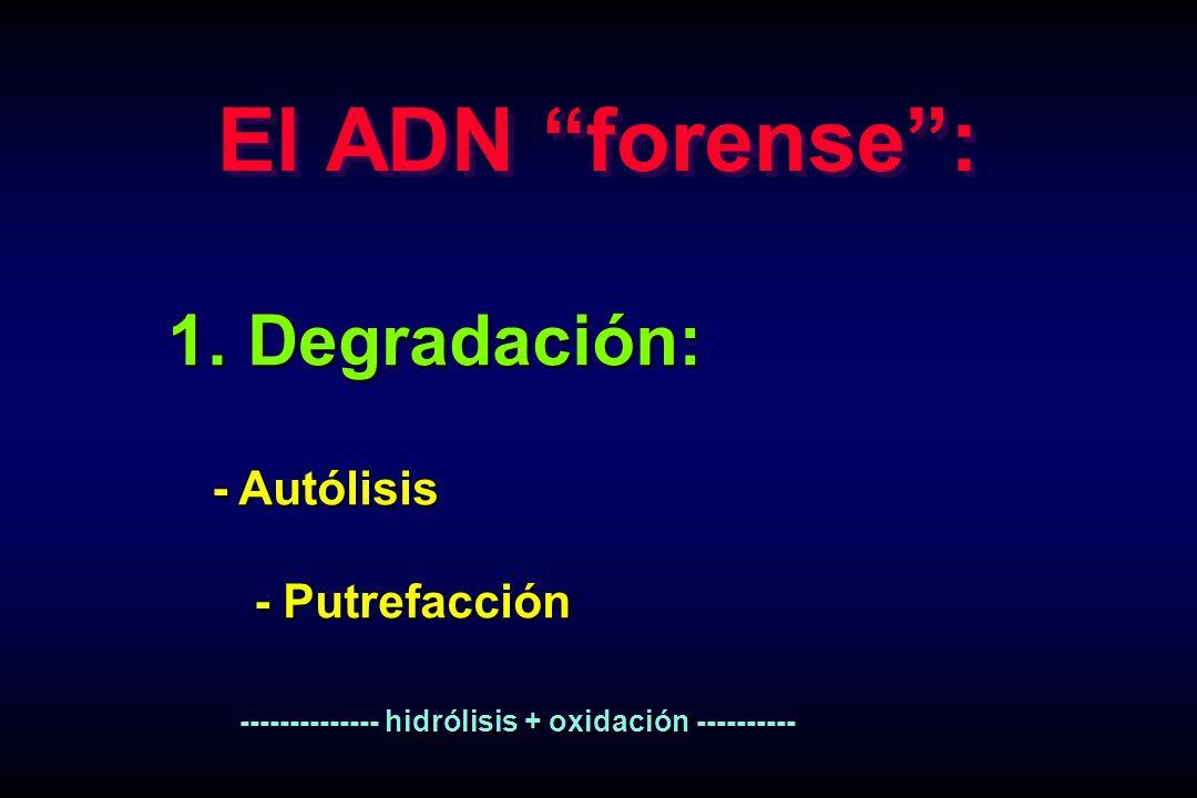 1. Degradación: 1. Degradación: - Autólisis - Autólisis - Putrefacción -------------- hidrólisis + oxidación ---------- -------------- hidrólisis + ox