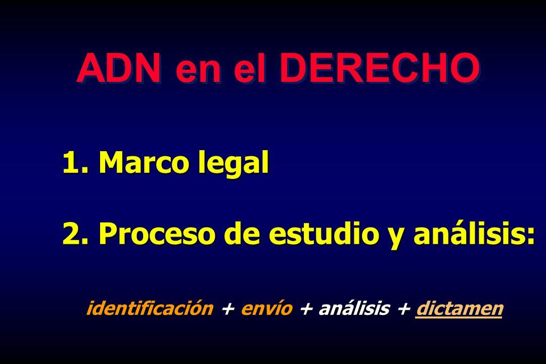 1. Marco legal 2. Proceso de estudio y análisis: identificación + envío + análisis + identificación + envío + análisis + dictamen ADN en el DERECHO