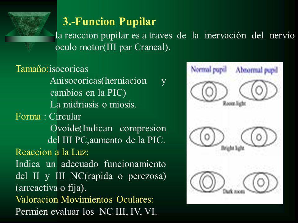 Tamaño:isocoricas Anisocoricas(herniacion y cambios en la PIC) La midriasis o miosis. Forma : Circular Ovoide(Indican compresion del III PC,aumento de