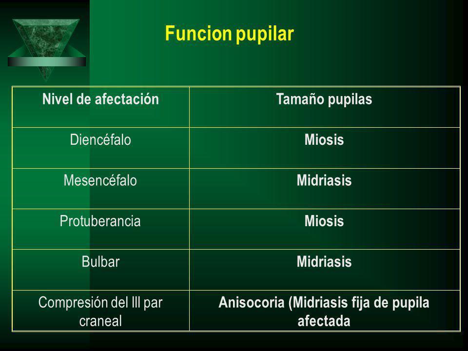 Nivel de afectaciónTamaño pupilas Diencéfalo Miosis Mesencéfalo Midriasis Protuberancia Miosis Bulbar Midriasis Compresión del lll par craneal Anisocoria (Midriasis fija de pupila afectada Funcion pupilar