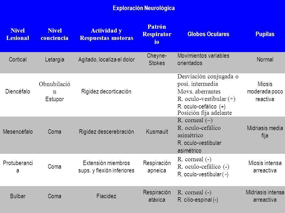 Exploración Neurológica Nivel Lesional Nivel conciencia Actividad y Respuestas motoras Patrón Respirator io Globos OcularesPupilas CorticalLetargiaAgi